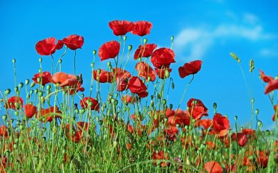 This Remembrance Sunday the Barn Church will be open for private prayer between 9:30-10:00 am.